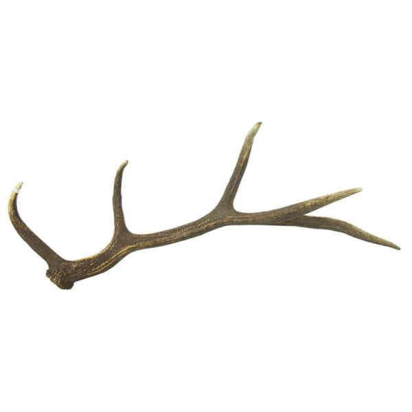 Antler Deer  Colored   Natural 50-75x25-30x20-25cm Mars & More