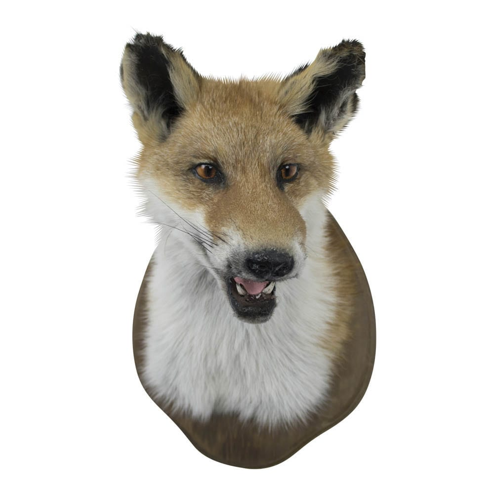 Trophy Fox  Colored   Leather 35x23x26 Mars & More